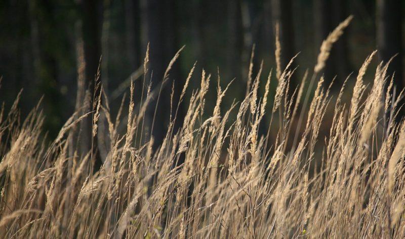 Promouvoir la chasse, défendre la ruralité et préserver la biodiversité
