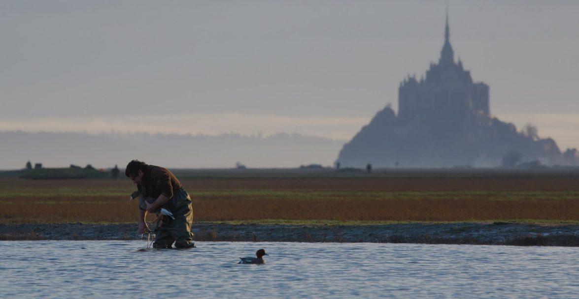 appelants canards et oies baie du mont saint michel chasse gibier d'eau