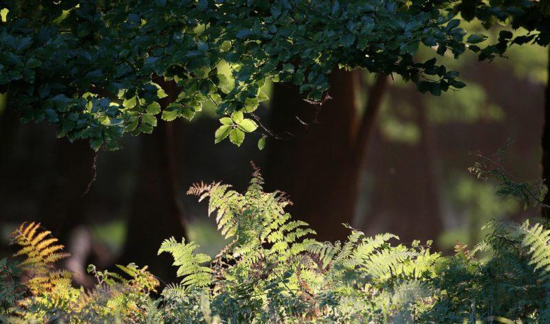 image forêt rayon de soleil