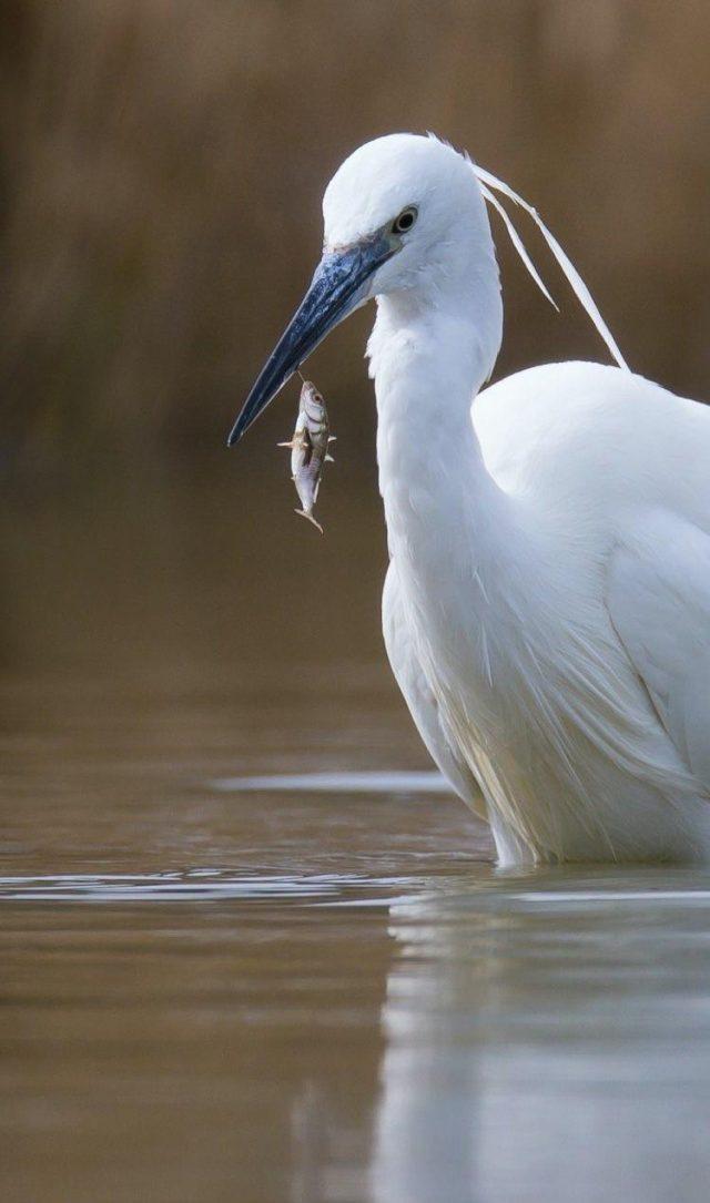 un oiseau pêche un poisson dans un étang