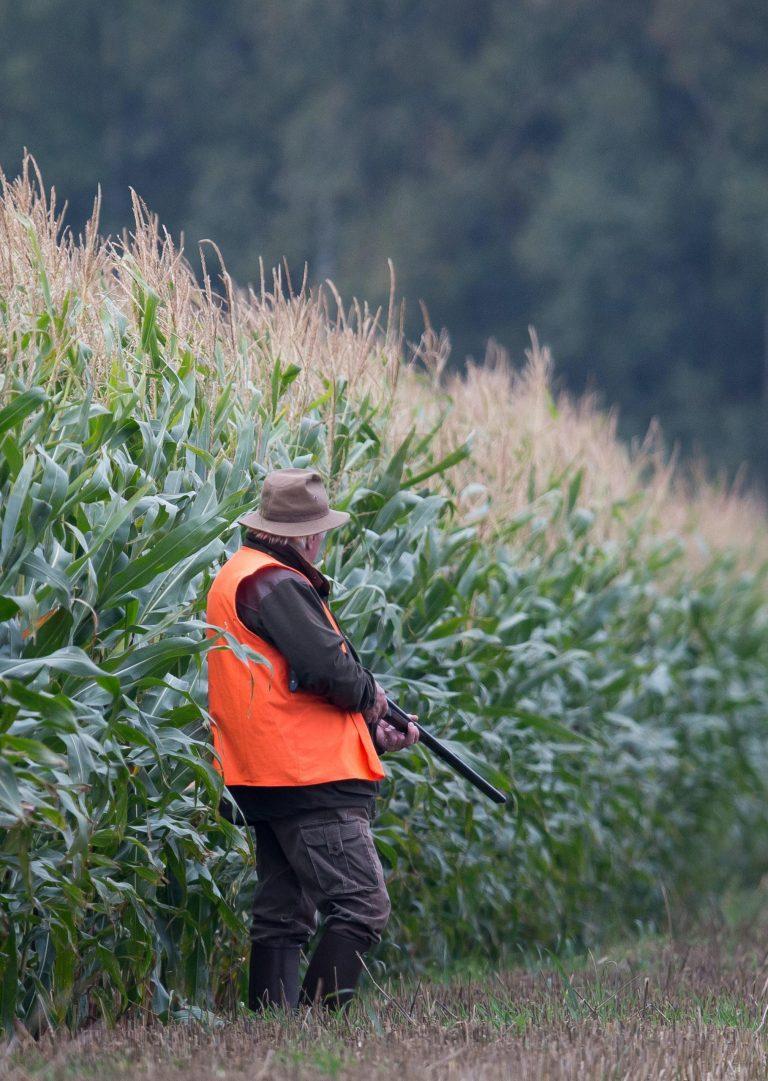 chasseur en bord de champs de maïs