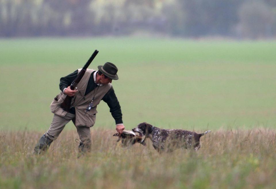 chasse petit gibier chien de chasse rapporte le gibier