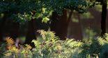 forêt rayon de soleil fougères