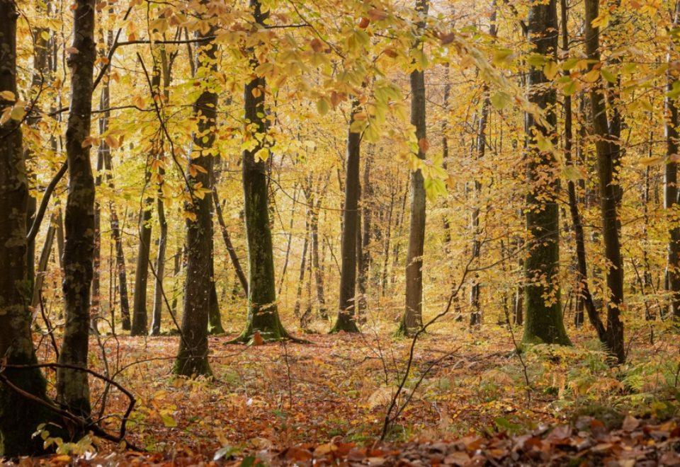 forêt à l'automne