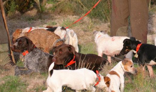 chasseur éleveur de chiens de chasse