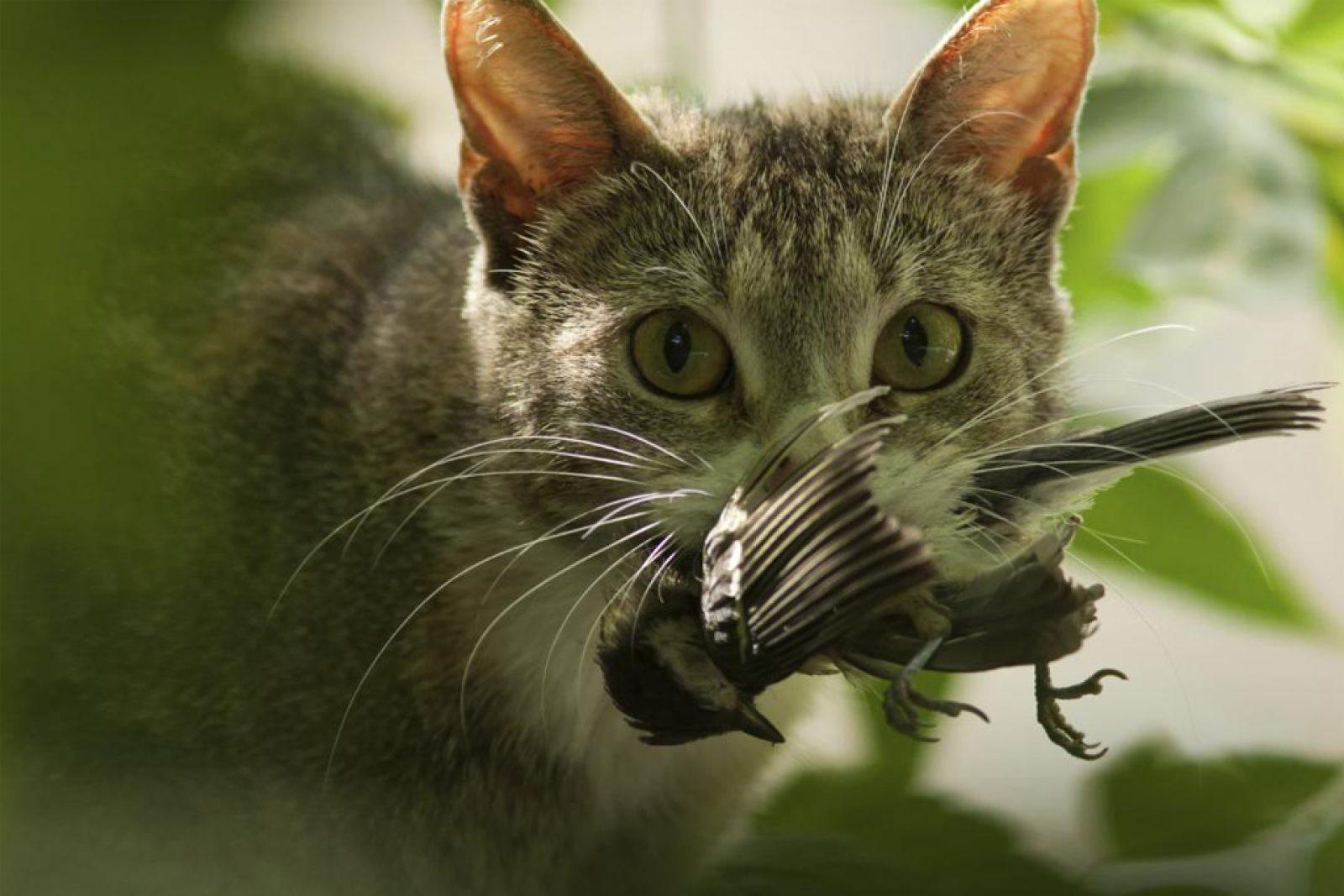 chat prédateur chasse un oiseau