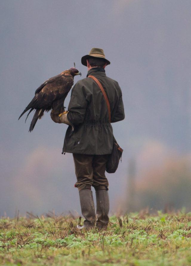 Un chasseur au vol avec son rapace
