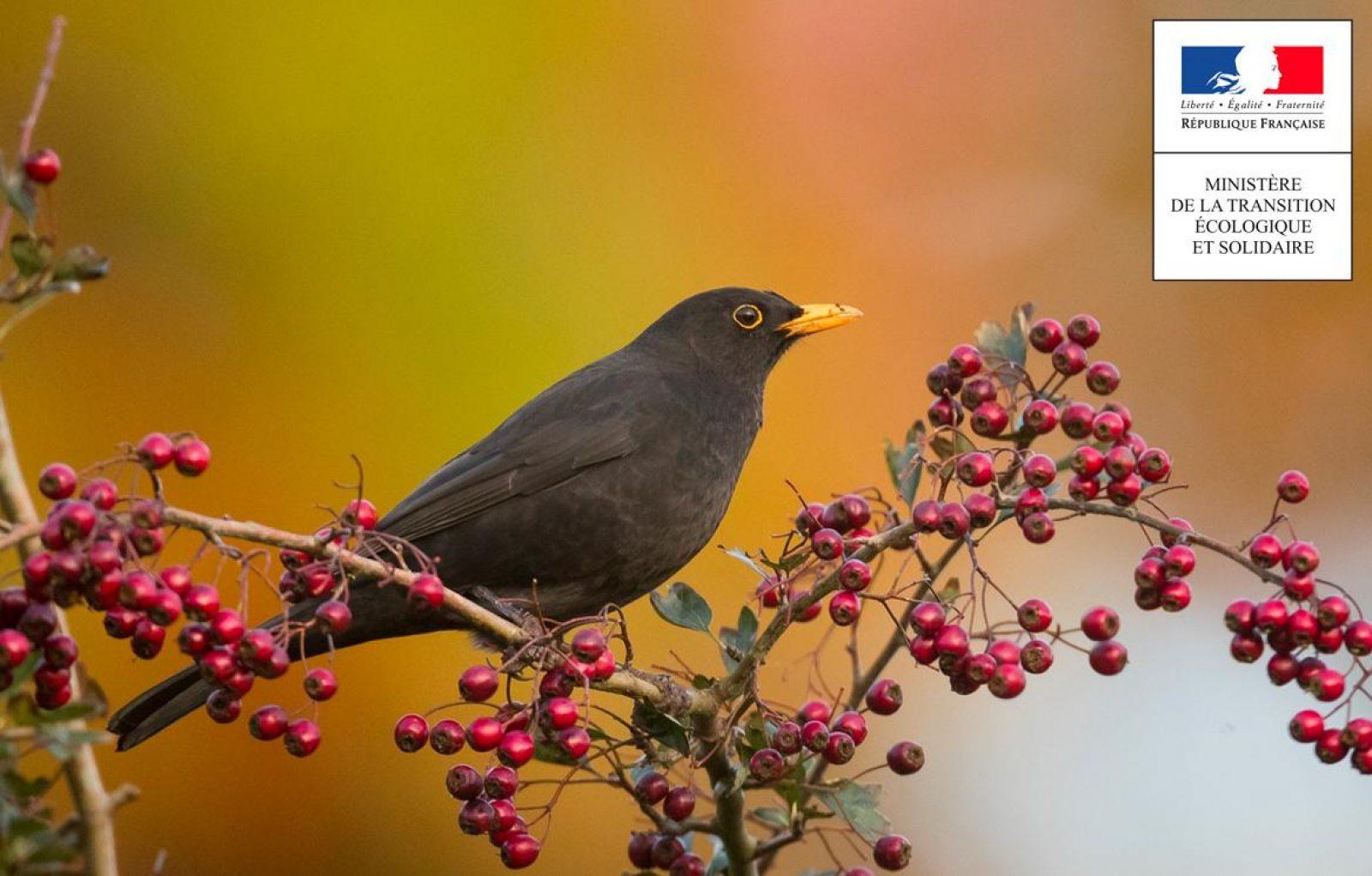 actualités chasse oiseaux