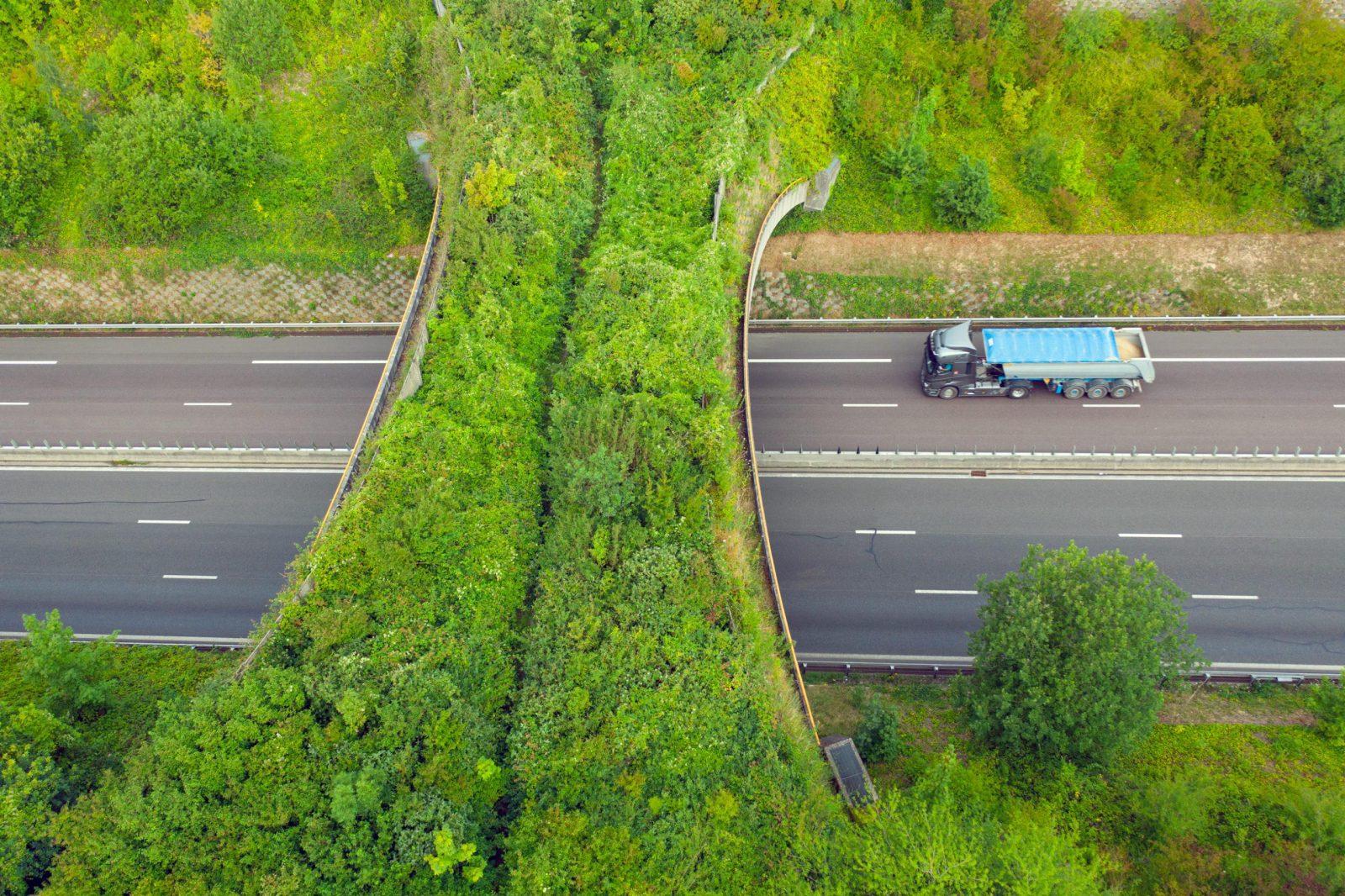biocorridor ou corridor vert sur autoroute