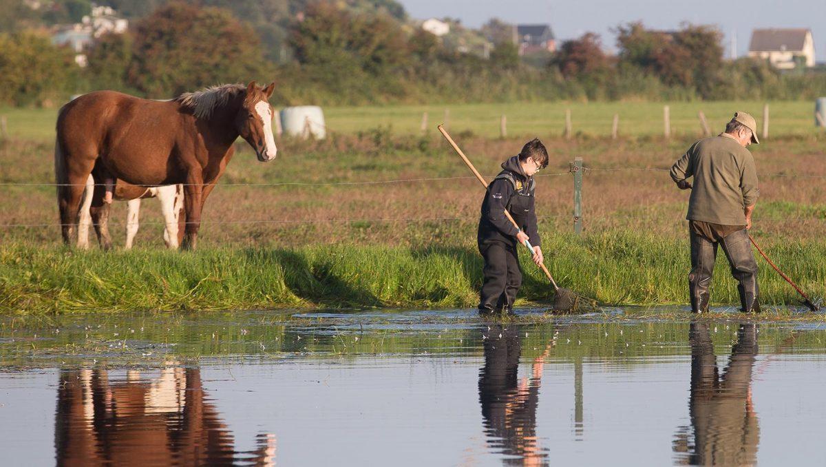 Des chasseurs nettoient un marais, actions des chasseurs pour la biodiversité