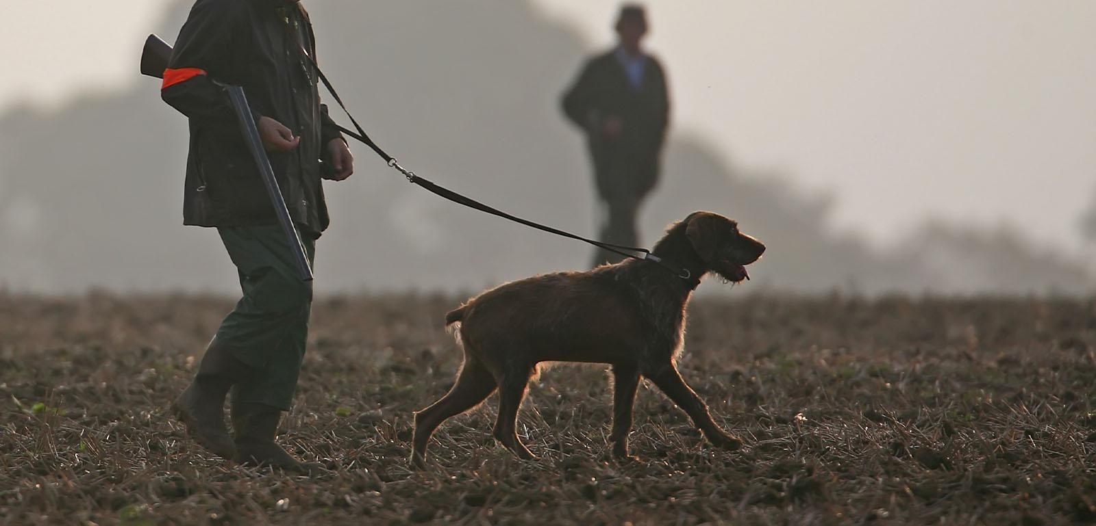 chasseur petit gibier et son chien en plaine