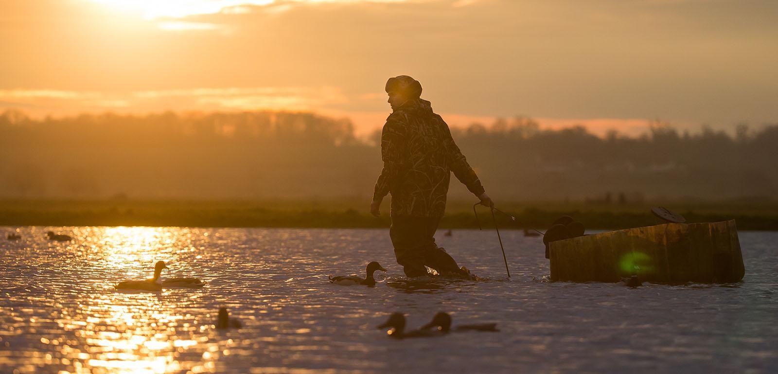 Un chasseur pose des appelants d'oiseaux dans un marais