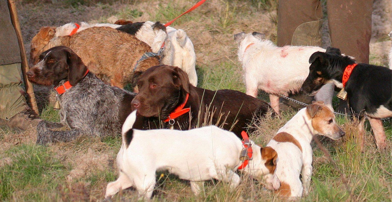 éleveur de chiens de chasse métier