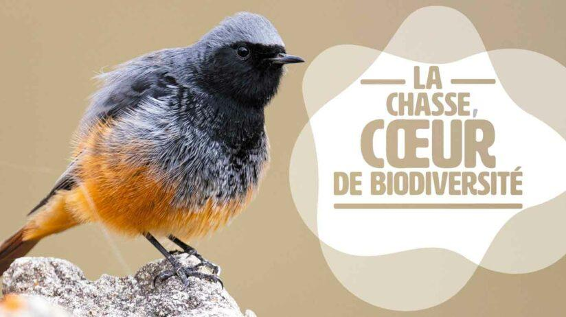 manifeste chasse biodiversité