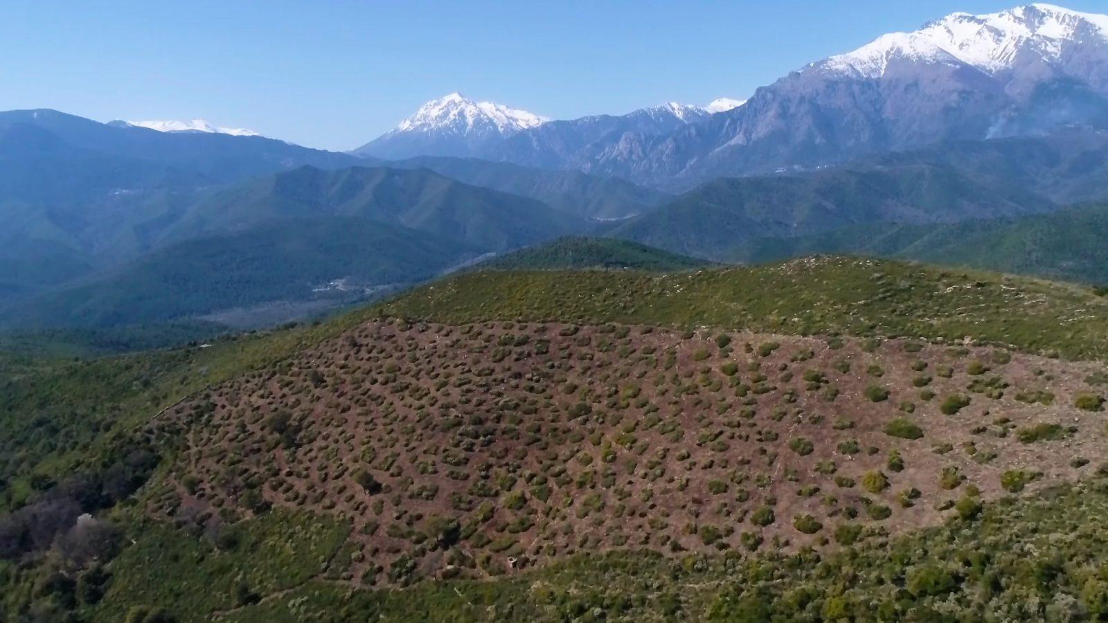Chasseurs de Haute Corse, acteurs de la biodiversité