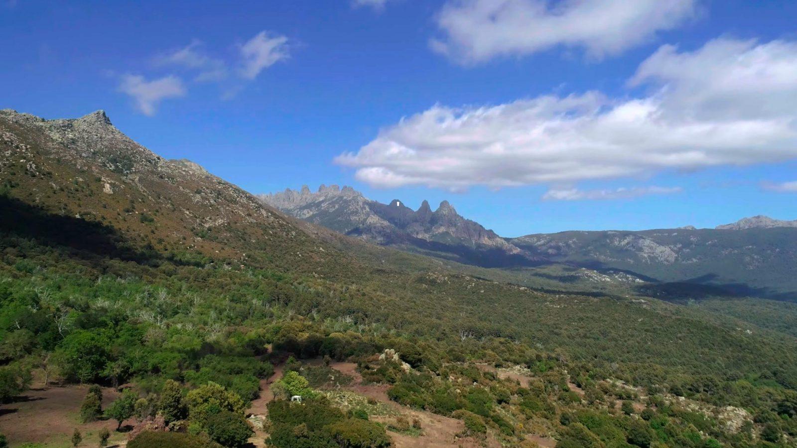 Travaux d'ouverture des milieux par la FRC de Corse